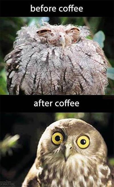 Prej in potem: Pred in po kavi