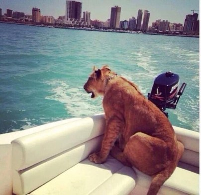 Eksotične živali na čolnu