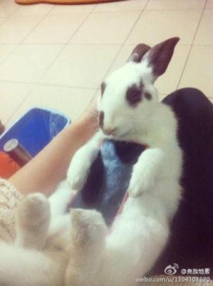 Zajčki kot ovitek za pametni telefon