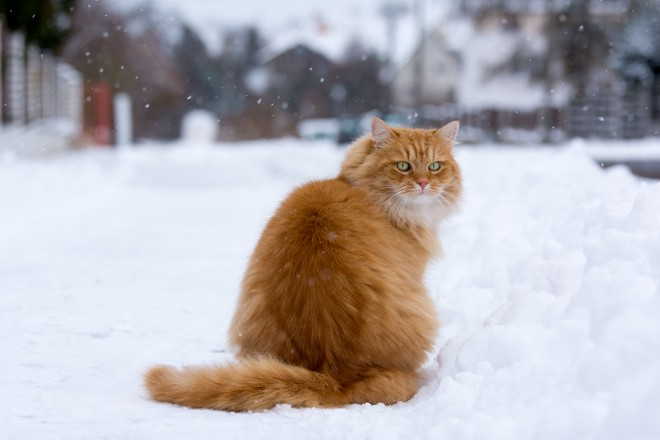Mačke vas čakajo.
