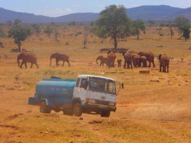 Patrick Kinolzo Mwalua, mož, ki žejnim divjim živalim vsak dan dostavi svežo vodo.