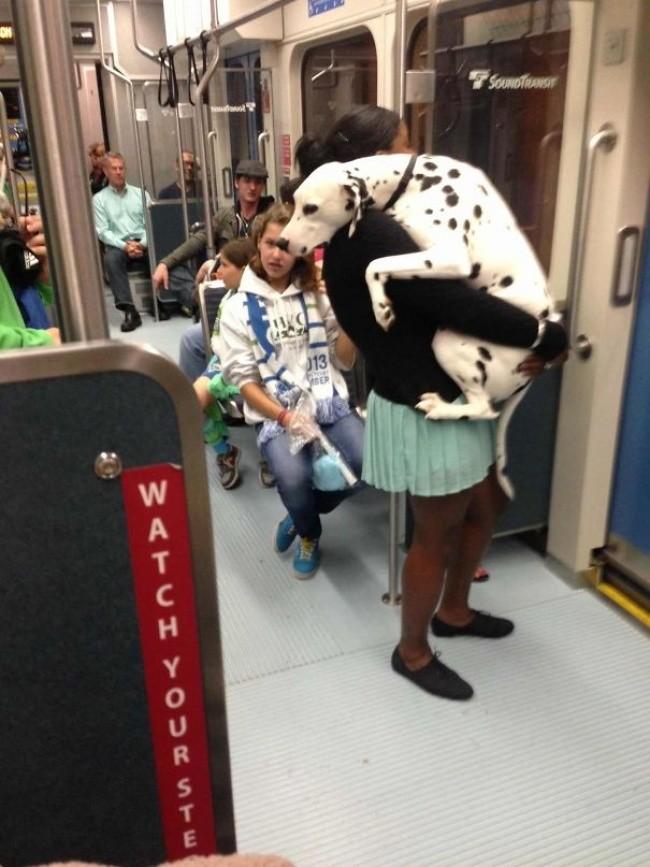 Kuža prvič na podzemni.