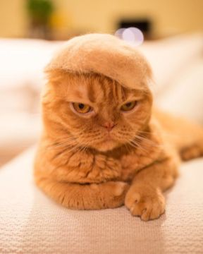 Te kape za mačke so obnorele internet.