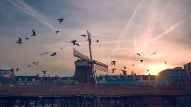 6. Nizozemska