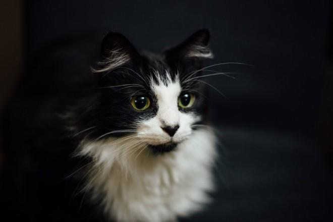 Videli bomo lahko nabor najrazličnejših mačk