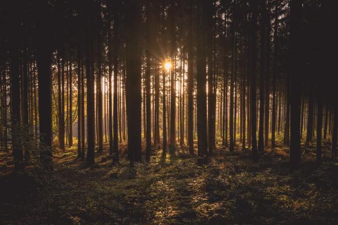 Gozd, listje in veter so rjavi zvok.