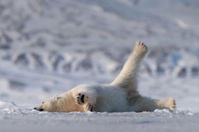 """""""Yoga Bear"""""""