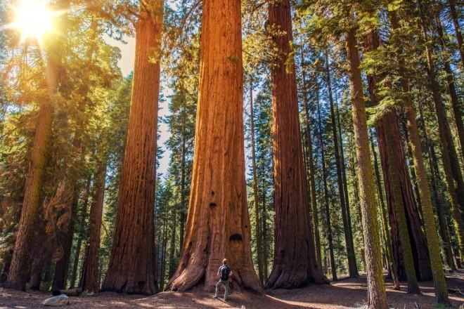 Narodni park Redwood