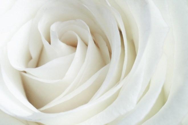 Bele vrtnice