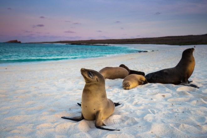 Galapaški otoki so raj za oči!