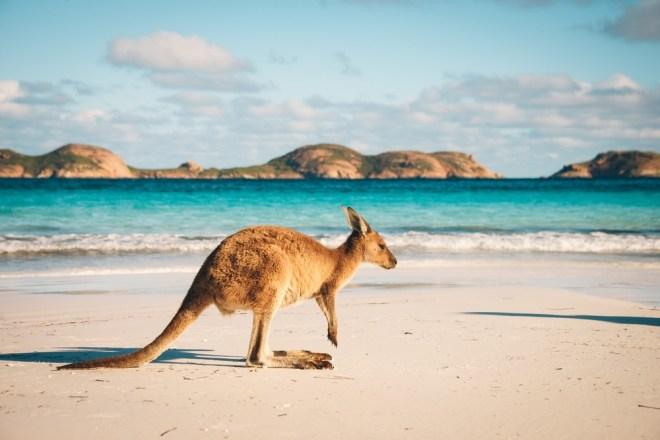 Avstralija je dežela, kjer je stičišče med divijno in modernostjo.