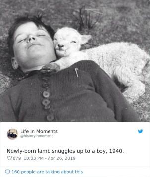 Novorojeni jagenjček se crklja s fantkom, okoli 1940.