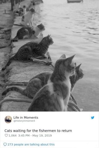 Mačke čakajo, da se ribič vrne.