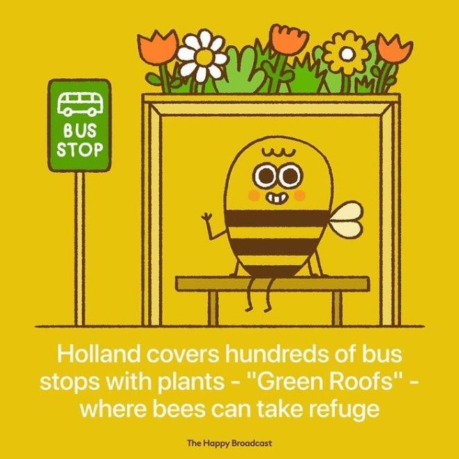 Reševanje čebel na Nizozemskem