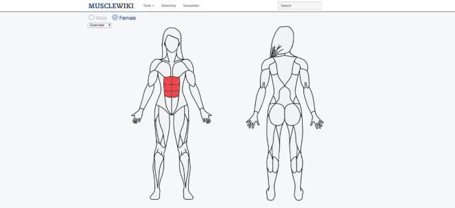 Vaje za vse mišice v telesu