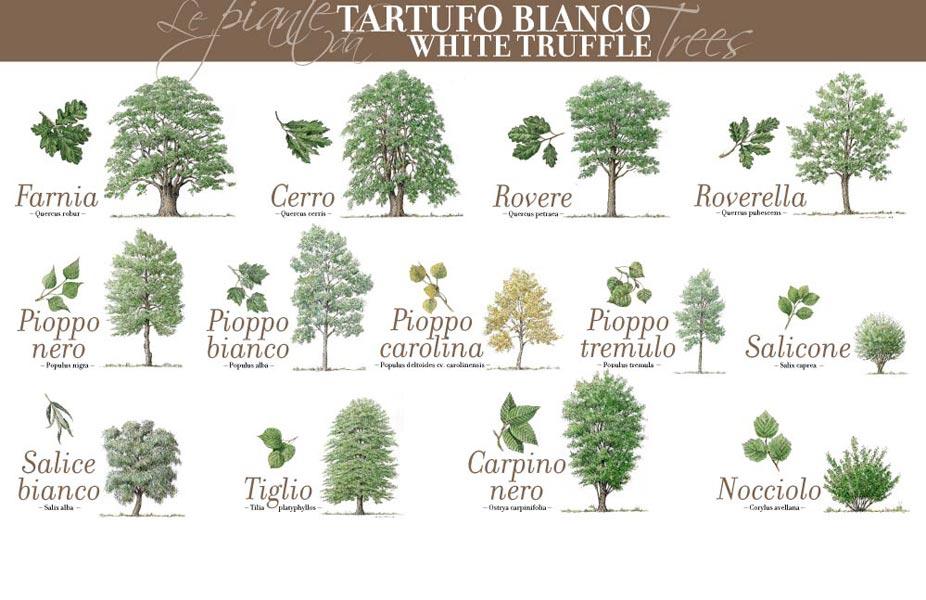 alba-white-truffle-eat