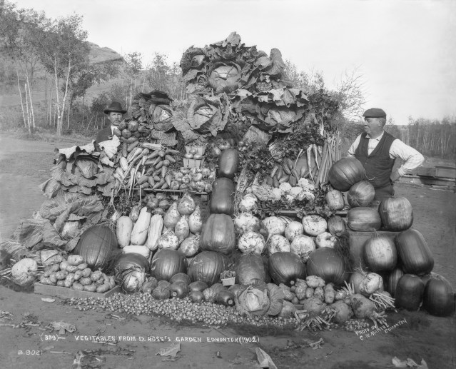 Vegetables from Donald Ross' garden, 1902. Photo by Charles Wesley Mathers. Provincial Archives of Alberta, B9021.