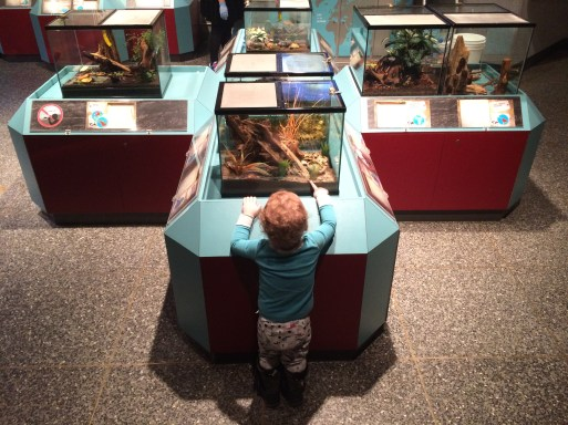 Sam with bugs in the Bug Room at the Royal Alberta Museum. Photo courtesy of the author.
