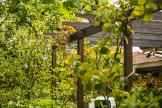 Open Garden - Holt-10