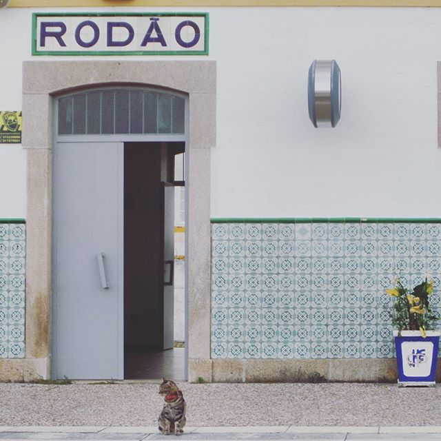 Cat in Ródão
