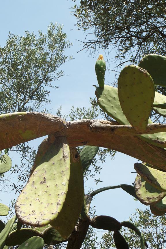 cactus vila nova da barquinha