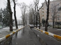 Belgrade Forest (Istanbul) under snow, January 2012 (photo 4 of 95)