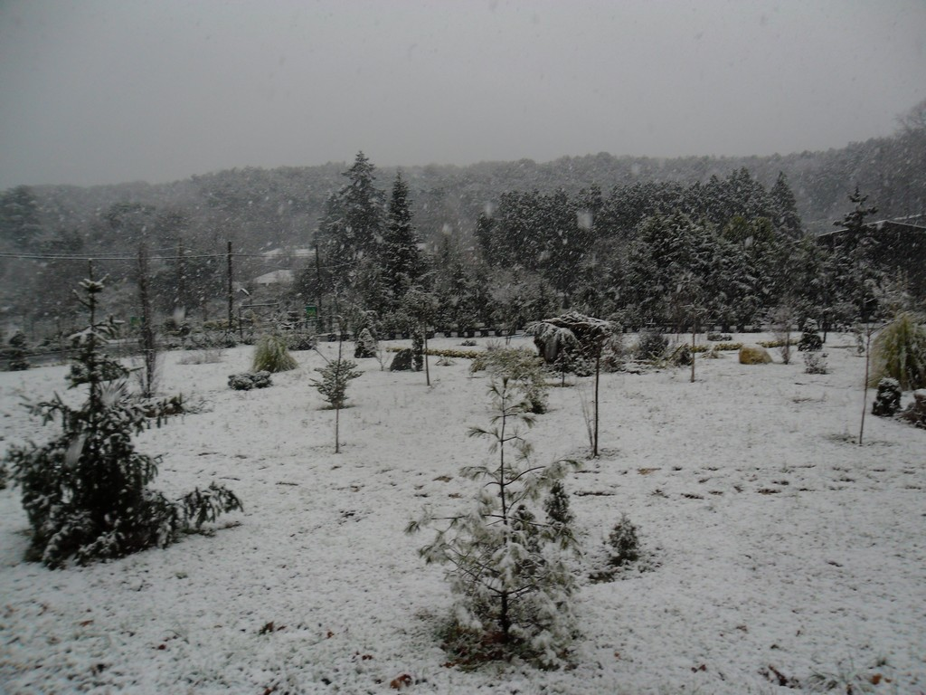 Belgrade Forest (Istanbul) under snow, January 2012 (photo 5 of 95)