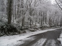 Belgrade-Forest-under-snow-January-2012-26