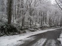 Belgrade-Forest-under-snow-January-2012-26