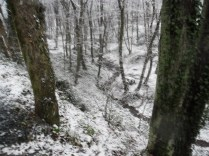 Belgrade-Forest-under-snow-January-2012-27