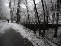 Belgrade-Forest-under-snow-January-2012-32