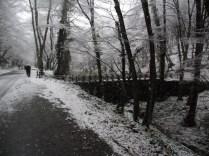 Belgrade-Forest-under-snow-January-2012-32