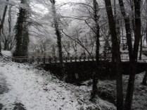 Belgrade-Forest-under-snow-January-2012-33