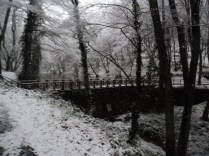 Belgrade-Forest-under-snow-January-2012-33