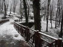 Belgrade-Forest-under-snow-January-2012-36