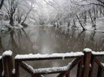 Belgrade-Forest-under-snow-January-2012-38