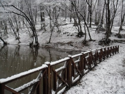 Belgrade-Forest-under-snow-January-2012-42