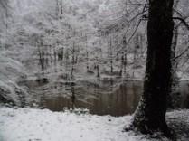 Belgrade-Forest-under-snow-January-2012-47