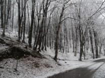 Belgrade-Forest-under-snow-January-2012-54