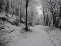Belgrade-Forest-under-snow-January-2012-68