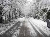 Belgrade-Forest-under-snow-January-2012-69