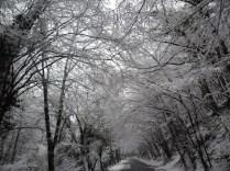 Belgrade-Forest-under-snow-January-2012-70