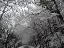 Belgrade-Forest-under-snow-January-2012-71