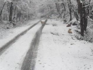 Belgrade-Forest-under-snow-January-2012-74
