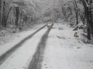 Belgrade-Forest-under-snow-January-2012-75