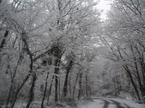 Belgrade-Forest-under-snow-January-2012-77