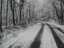 Belgrade-Forest-under-snow-January-2012-78