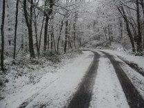 Belgrade-Forest-under-snow-January-2012-78