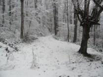 Belgrade-Forest-under-snow-January-2012-82
