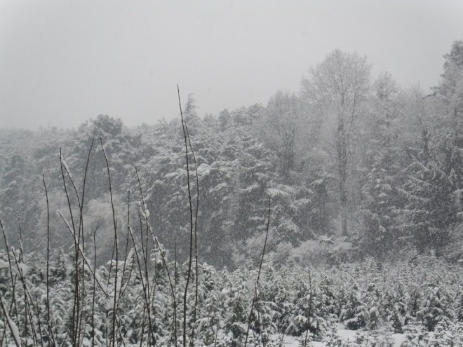 Belgrade Forest (Istanbul) under snow, January 2012 (photo 91 of 95)